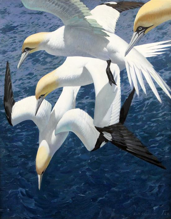 Keith Shackleton (1923-2015) Dive Sequence: Gannets 30 x 24in.